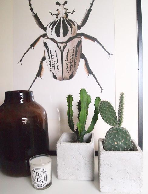 Mikke Mus kaktus