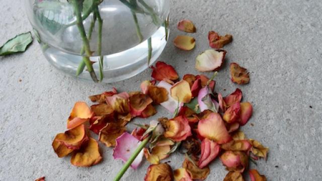 Når blomstene visner…