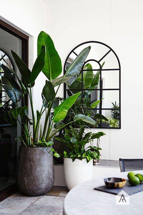 Grønne planter på balkongen