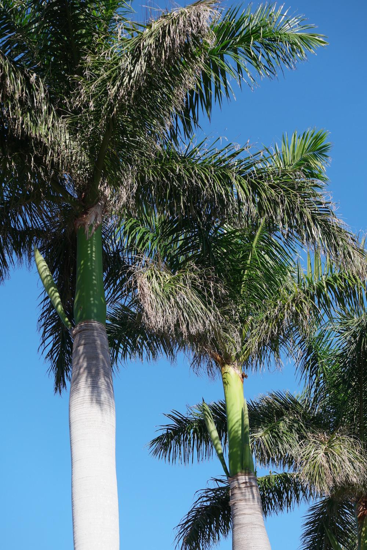 Fra palmesus til snøkledd landskap