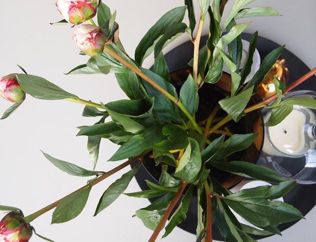 Grønt blomstertips til hjemmet