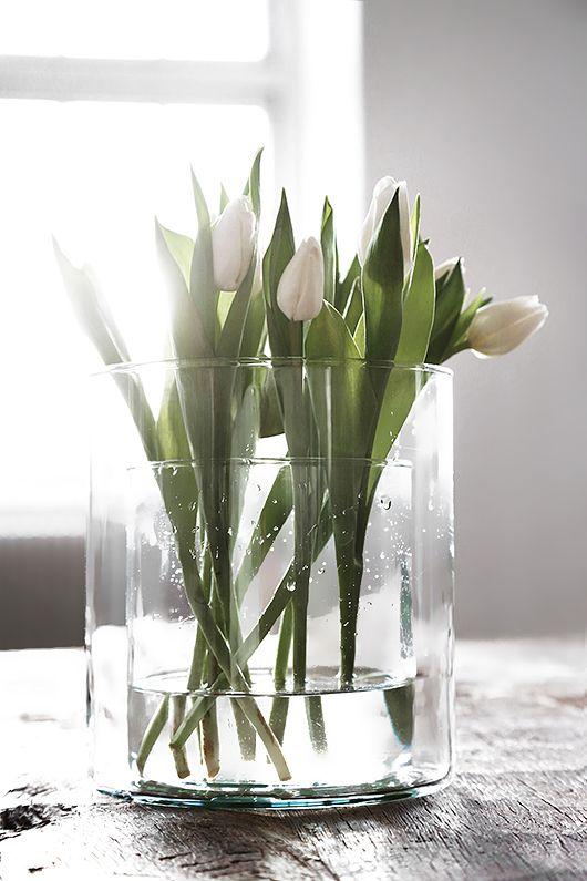 Tid for tulipaner